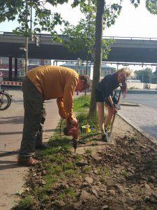 Urban Gardening 2